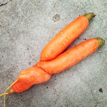 Spooning Carrots - In Her Chucks