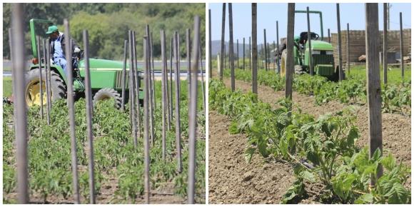 CSA Farming